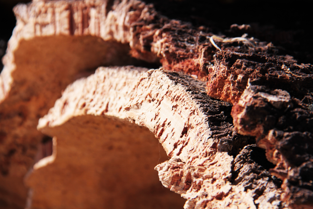 ​ Detail of the cork oak bark  ​