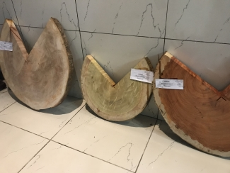 Tropical timber samples